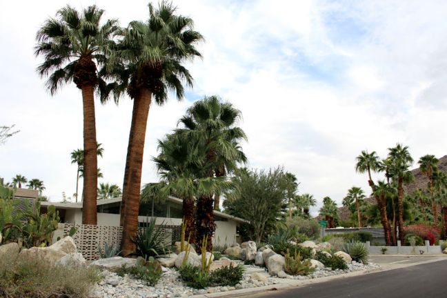 palm spring 1